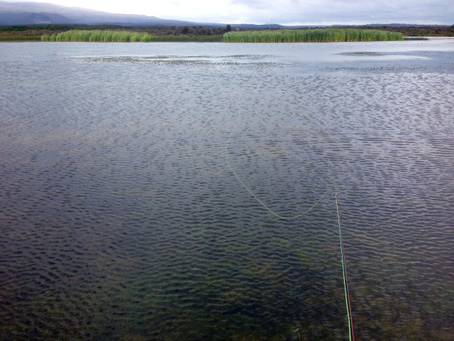 Her gikk det minst tre fisker frem og tilbake